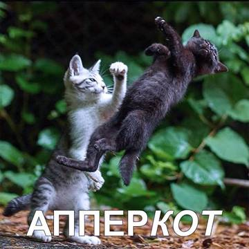 http://sh.uploads.ru/t/u3C8K.jpg