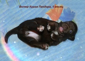 http://sh.uploads.ru/t/uXcBR.jpg