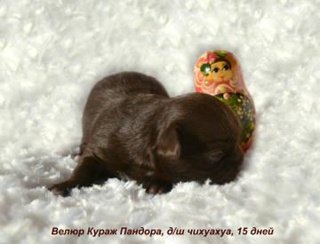 http://sh.uploads.ru/t/um0b3.jpg