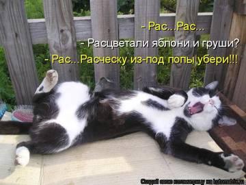 http://sh.uploads.ru/t/uvJrw.jpg
