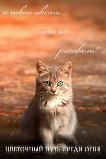 http://sh.uploads.ru/t/w1fMc.png