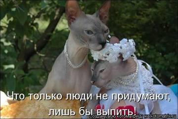 http://sh.uploads.ru/t/wPF6V.jpg