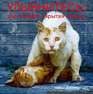 http://sh.uploads.ru/t/wPdh5.jpg