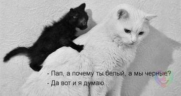 http://sh.uploads.ru/t/wdiJA.jpg
