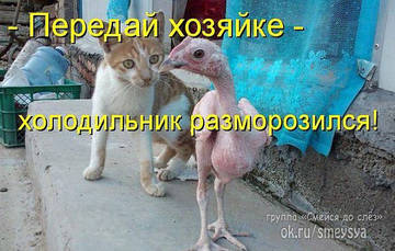 http://sh.uploads.ru/t/whSjQ.jpg