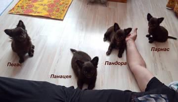 http://sh.uploads.ru/t/wqRe4.jpg