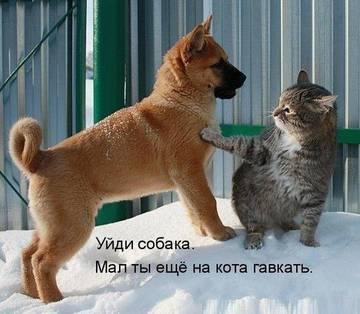 http://sh.uploads.ru/t/x7UTJ.jpg