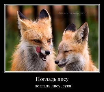 http://sh.uploads.ru/t/x7VyJ.jpg