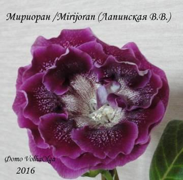 http://sh.uploads.ru/t/xFiRY.jpg