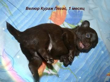 http://sh.uploads.ru/t/xasCd.jpg