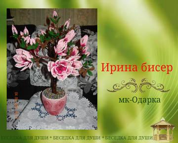 http://sh.uploads.ru/t/xjCIa.jpg