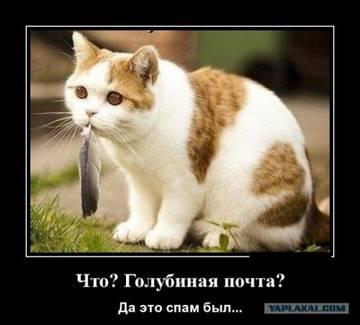 http://sh.uploads.ru/t/yJmN2.jpg