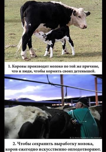 http://sh.uploads.ru/t/yZ8v4.jpg