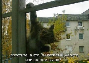 http://sh.uploads.ru/t/zCr27.jpg