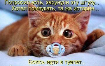 http://sh.uploads.ru/t/zqbWB.jpg