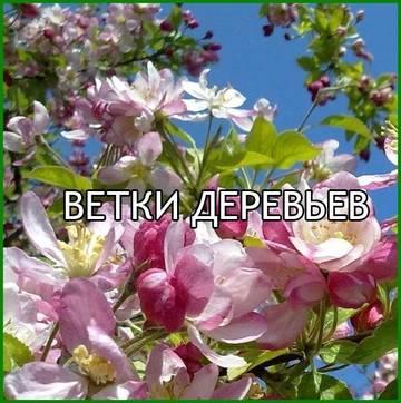 http://sh.uploads.ru/t/zuUrq.jpg