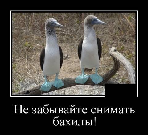 http://sh.uploads.ru/t/zvNA9.jpg