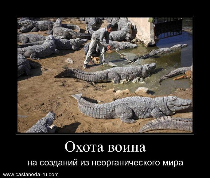 http://sh.uploads.ru/vJpng.jpg