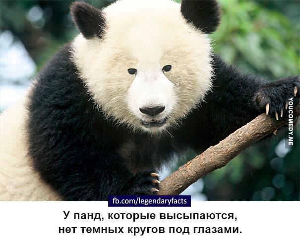 http://sh.uploads.ru/vVjkU.jpg