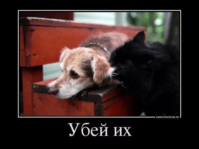 http://sh.uploads.ru/y95Zj.jpg