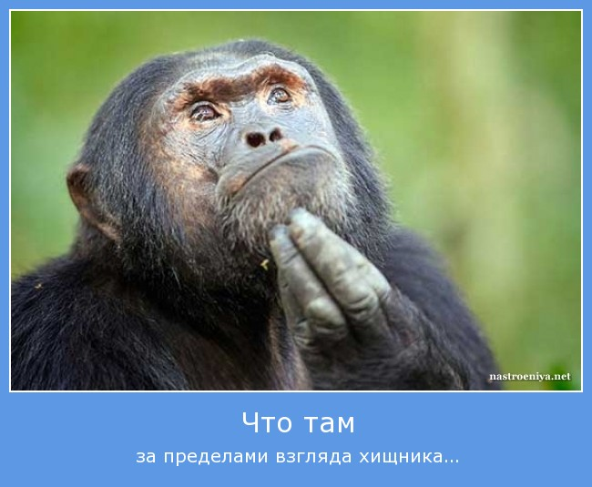 http://sh.uploads.ru/yYv07.jpg