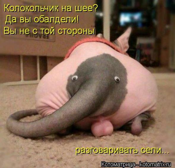 http://sh.uploads.ru/yfjvO.jpg