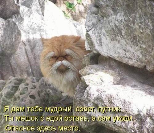 http://sh.uploads.ru/zS1rW.jpg