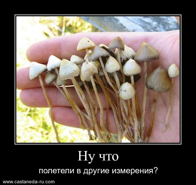 http://sh.uploads.ru/ExuUZ.jpg
