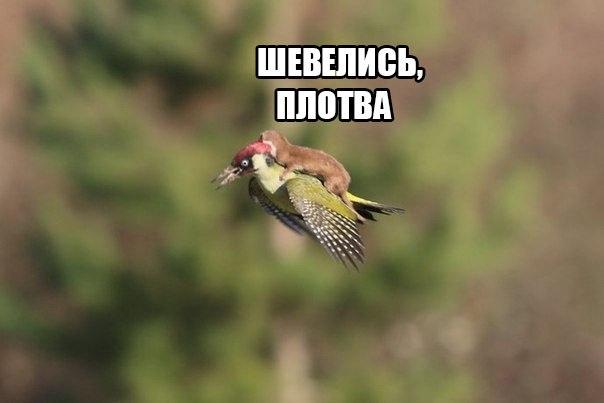 http://sh.uploads.ru/nNqRC.jpg