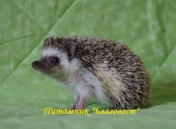 http://sh.uploads.ru/t/0YF84.jpg