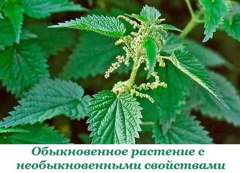 http://sh.uploads.ru/t/1AFQ5.jpg