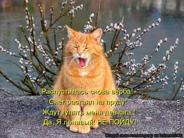 http://sh.uploads.ru/t/EGnVt.jpg