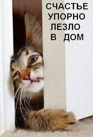 http://sh.uploads.ru/t/ITfYF.jpg