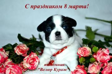 http://sh.uploads.ru/t/KmhQ7.jpg