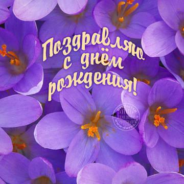 http://sh.uploads.ru/t/R4BTU.jpg
