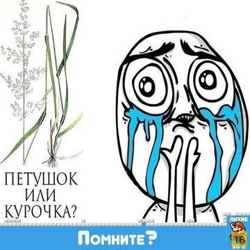 http://sh.uploads.ru/t/R5Vng.jpg