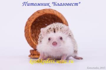 http://sh.uploads.ru/t/R9J3l.jpg