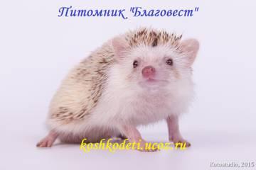 http://sh.uploads.ru/t/Ryr58.jpg