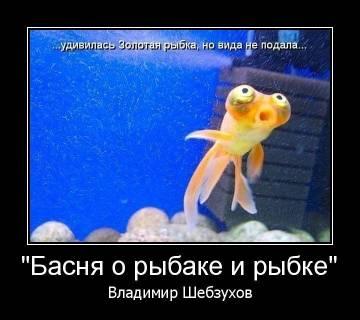 http://sh.uploads.ru/t/aUsxm.jpg