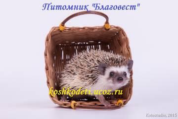 http://sh.uploads.ru/t/jXHc1.jpg