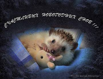 http://sh.uploads.ru/t/l3X42.jpg