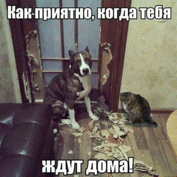 http://sh.uploads.ru/t/tMOh2.jpg