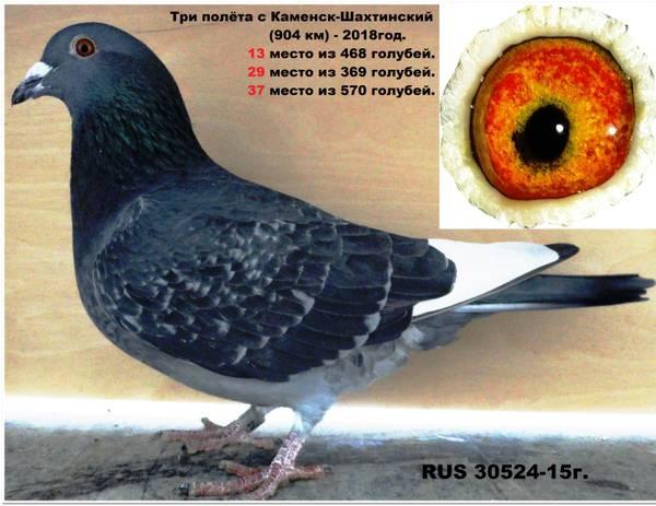 http://sh.uploads.ru/t/tcI3m.jpg