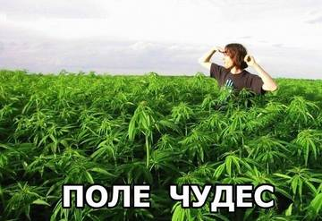 http://sh.uploads.ru/t/vPWnI.jpg