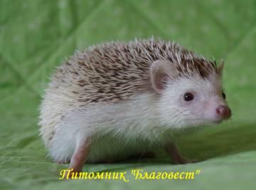 http://sh.uploads.ru/t/y5Mog.jpg