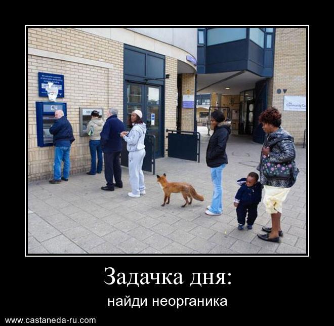 http://sh.uploads.ru/uyk6P.jpg